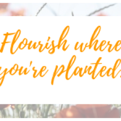 Flourish where you're planted